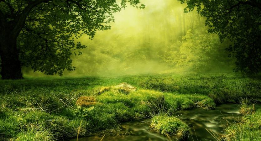 Več o naturopatiji …